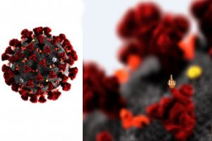 il detective cannobio coronavirus